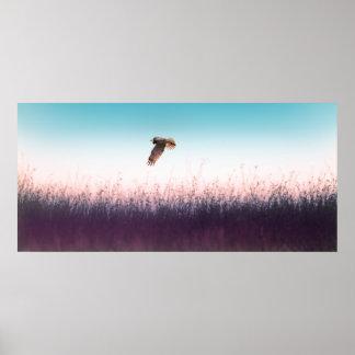 Harrier Hawk Posters
