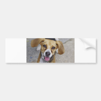 harrier.png bumper sticker