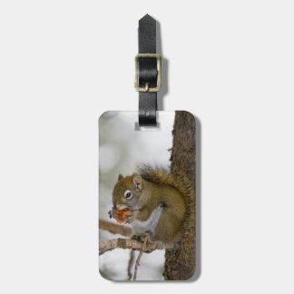 Harriman State Park, Idaho. USA. Red Squirrel Bag Tag