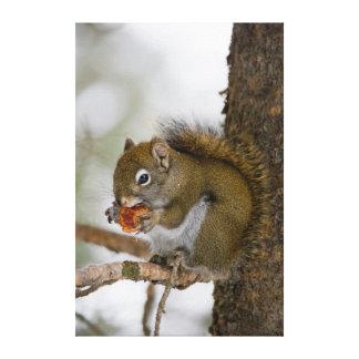 Harriman State Park, Idaho. USA. Red Squirrel Canvas Print