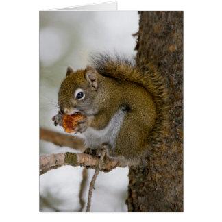 Harriman State Park, Idaho. USA. Red Squirrel Card