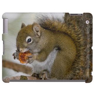 Harriman State Park, Idaho. USA. Red Squirrel