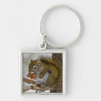 Harriman State Park, Idaho. USA. Red Squirrel Keychain