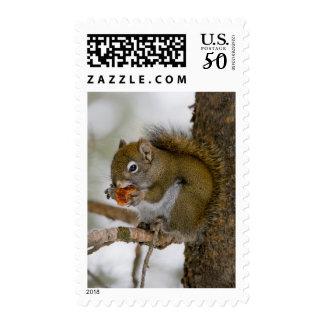 Harriman State Park, Idaho. USA. Red Squirrel Postage