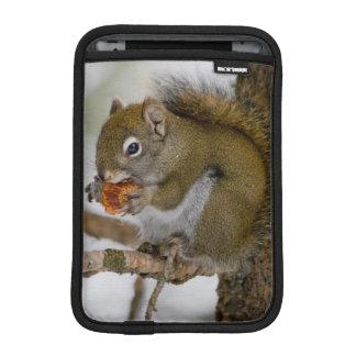 Harriman State Park, Idaho. USA. Red Squirrel Sleeve For iPad Mini