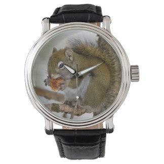 Harriman State Park, Idaho. USA. Red Squirrel Wristwatch