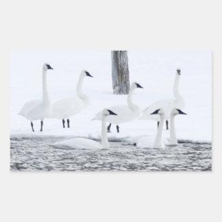 Harriman State Park, Idaho. USA. Trumpeter Swans Rectangular Sticker
