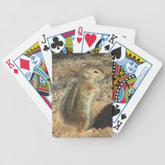Harris' Antelope Squirrel Playing Cards