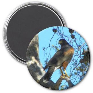 Harris Hawk 3 Inch Round Magnet