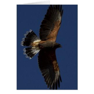 Harris Hawk 5 Card