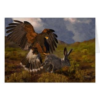 Harris Hawk and Jackrabbit - acrylic Cards