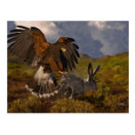 Harris Hawk and Jackrabbit - acrylic Post Cards
