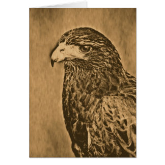 Harris Hawk Bird of Prey Close Up Card