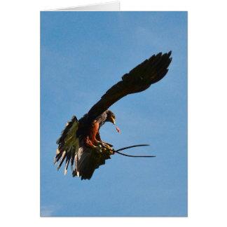 Harris hawk blank greeting card