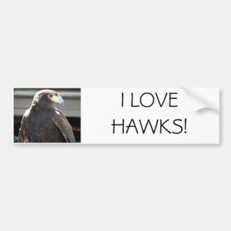 Harris' Hawk Bumper Sticker