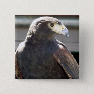 Harris' Hawk Button