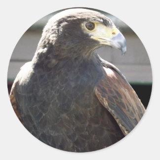 Harris' Hawk Classic Round Sticker
