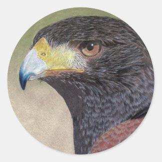Harris Hawk colored pencils Classic Round Sticker