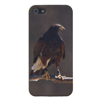 Harris' Hawk Cover For iPhone SE/5/5s