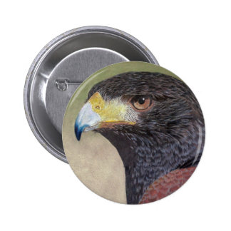 Harris Hawk-cp Pinback Button