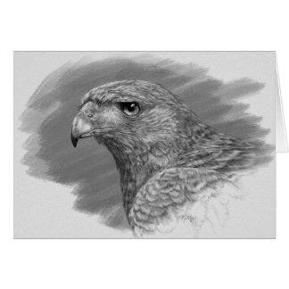 Harris Hawk Drawing Card