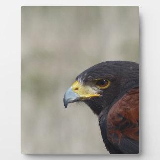 Harris Hawk el retrato Placas Con Fotos