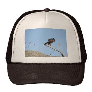 Harris Hawk Trucker Hat