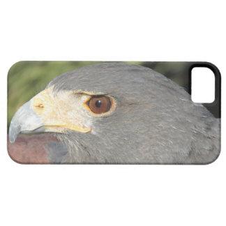 Harris Hawk iPhone 5 Case