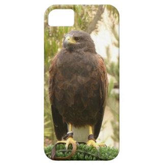 Harris Hawk iPhone SE/5/5s Case