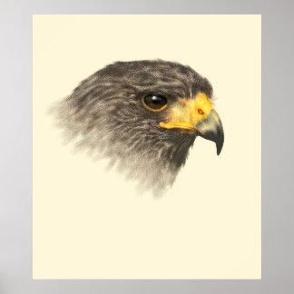 Harris Hawk - Mixed Medium Poster