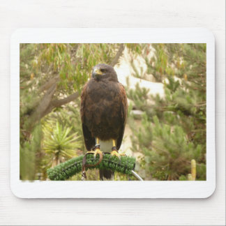 Harris Hawk Mouse Pad