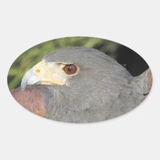 Harris Hawk Oval Sticker
