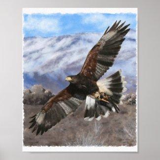 Harris Hawk painting poster print