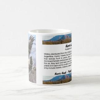 Harris Hawk- pastel Coffee Mug