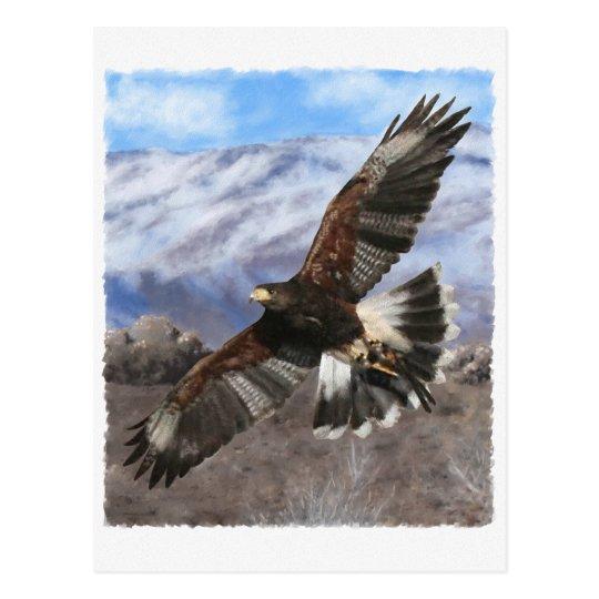 Harris Hawk- pastel Postcard
