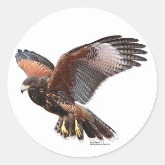 Harris Hawk Pegatina Redonda