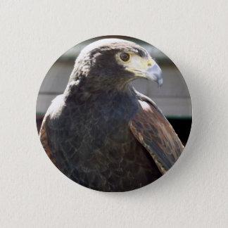 Harris' Hawk Pinback Button