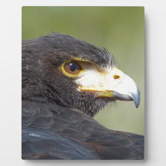 Harris Hawk Placas De Madera
