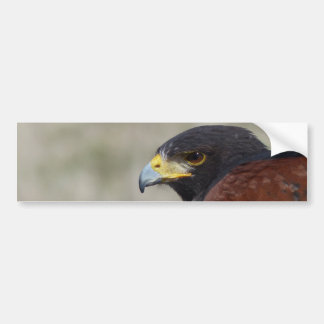 Harris Hawk Portrait Bumper Sticker