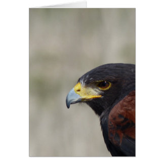 Harris Hawk Portrait Card