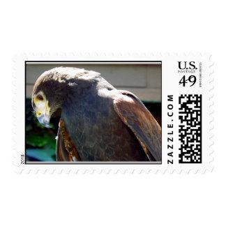 Harris' Hawk Postage