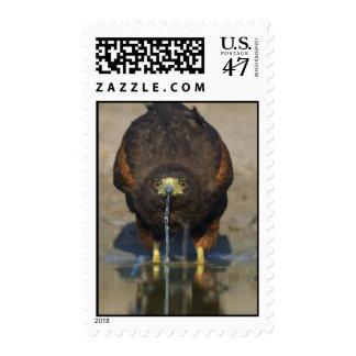 Harris Hawk Stamp