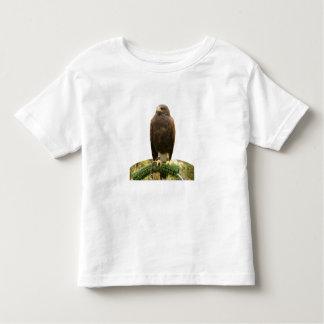 Harris Hawk T-shirts