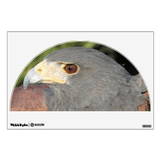 Harris Hawk Wall Decal
