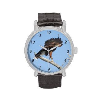 Harris Hawk Wristwatch