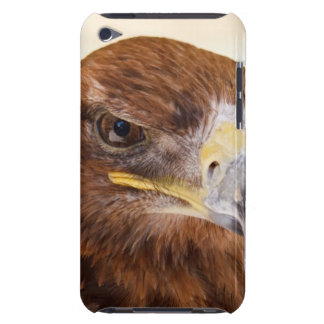 Harris Hawk Watching Barely There iPod Cover