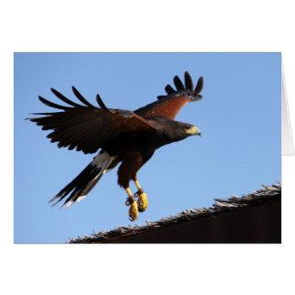 Harris Hawk Wings Spread Card