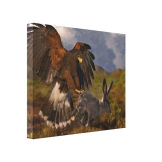 Harris Hawk y Jackrabbit Lienzo Envuelto Para Galerías