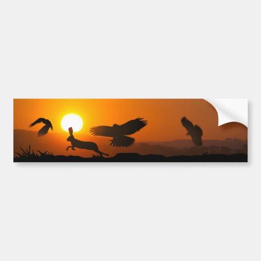 Harris Hawks Hunting Car Bumper Sticker