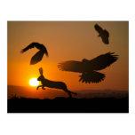 Harris Hawks Hunting Postcard